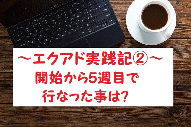 エクアド実践記②5週目に行った作業は?サイト診断の内容確認!